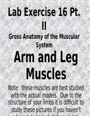 Muscle Models Pt II - REVISED