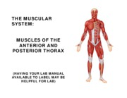 w6 l2 ANT AND POST THROAX MUSCLES