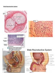 Male Reproductive Review