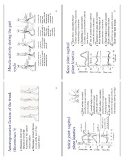 lecture_17_clinical_biomechanics_of_gait06