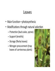Lecture 5 leaves-morphology-2016-7-18-19