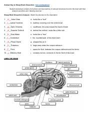 SheepBrainDissectionKey-1.pdf - Answer Key to Sheep Brain ...